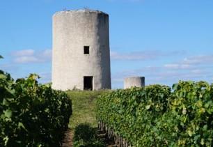La vigne, une culture parmi d'autres