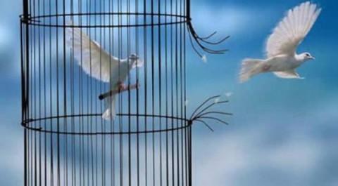 13 - cage_activer sa force de vie