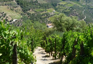 4 - zoom rang de vignes douro